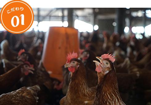 微生物の力と平飼いで産まれる健康な卵
